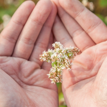 essentially: hand showing blooming buckwheat in the fall