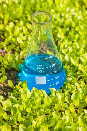flask with blue solution in the lettuce seedling field photo