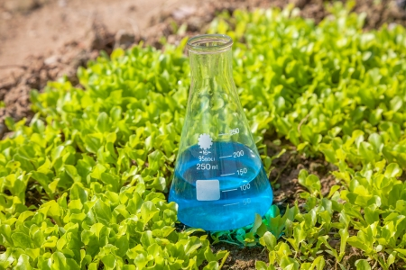 a solution tube: flask with blue solution in the lettuce seedling field