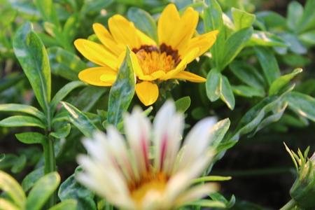 beautifull: Natural beautifull Flower Stock Photo