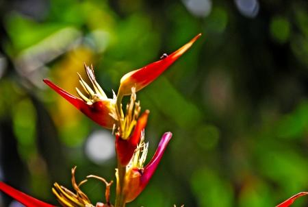 exotic flower: Exotic flower