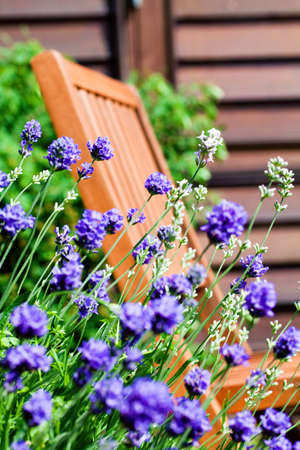 Garden Chair on Balcony seen through French Lavender Stock Photo