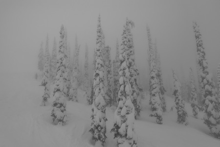 whitewater: trees in the fog at whitewater ski resort, canada Stock Photo