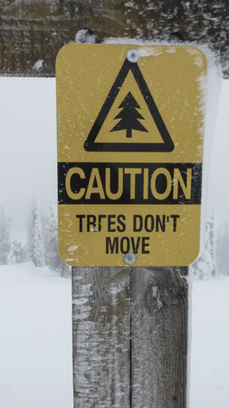 sign says trees dont move