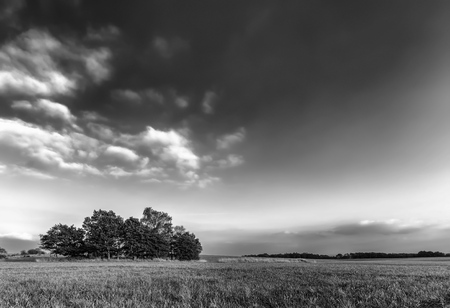 Summer meadow with clouds