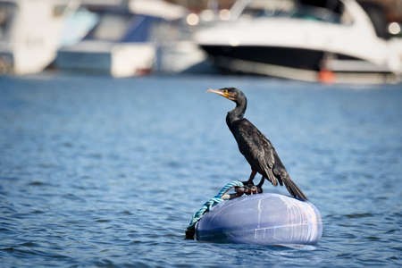 a cormorant on a rock in stockholm