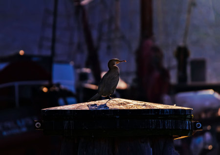 cormorant on bollard in stockholm Standard-Bild