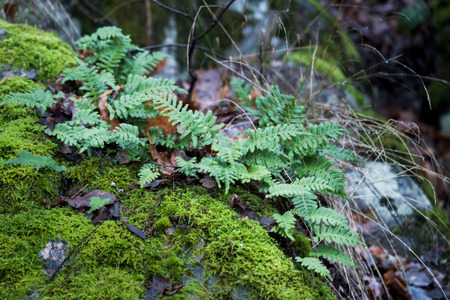 moss, lichens, and ferns growing on big rock