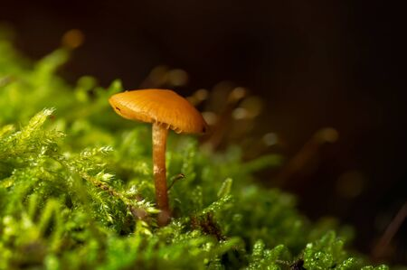 tiny mushroom on moss in autumn