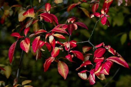 red autumn leaves on dark background
