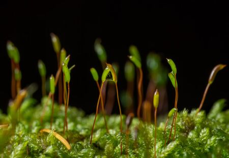 moss seeds in autumn on black background Banco de Imagens