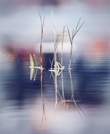 Withered grass in puddle with colouful background Stock fotó