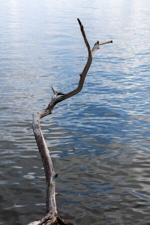 bare tree branch over lake