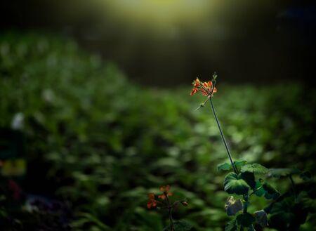 tiny orange flower on green background Stock Photo