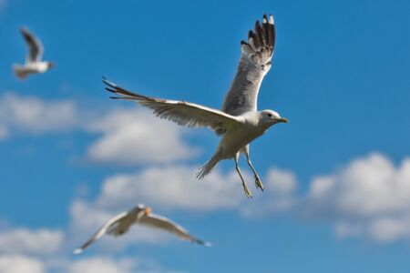 group of seagulls against blue sky