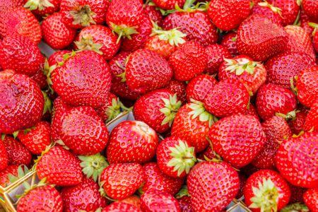 ripe sweet strawberries in summer