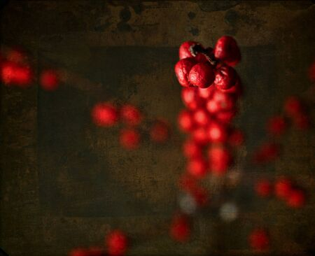red berries on painterly background Stock Photo