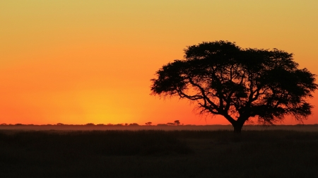 African Sunset - Yellow  photo