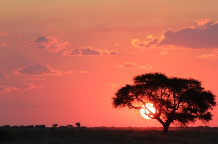 africa sunset: Sunset over Africa - Red Gold