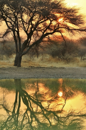 Sunset of shining light over a watering hole and old Camel thorn tree as seen in Namibia Stock Photo