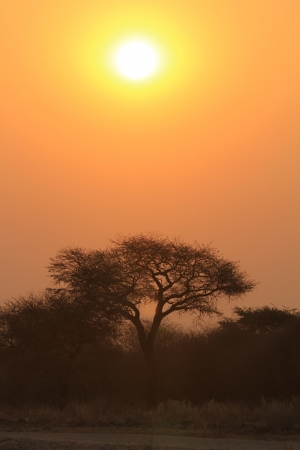 Sunset and Tree Silhouette - Nature Background of Color and Beauty from the wilds of Africa  photo
