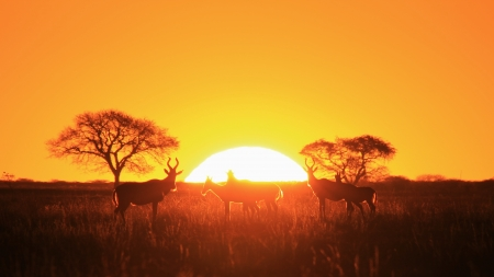 Sunset Background in wild Africa  photo