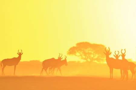 Wildlife Background and Golden Sunset in Africa  photo