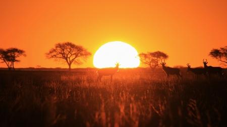 aura sun: Sunset Background and Wildlife beauty from wild Africa Stock Photo