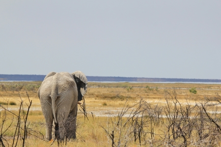 Elephant - Wildlife Background from Africa - Beautiful Mother Nature and her Animal Kingdom photo