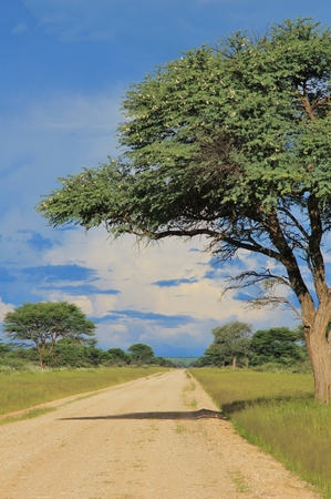 gravel roads: Gravel Roads of Africa - Towards the Storm
