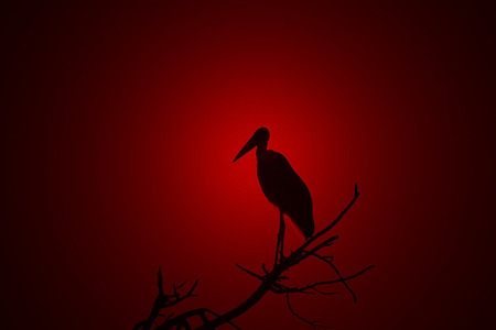 faded: Marabou Stork - Faded Red Backgrounds of Beauty