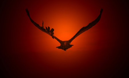 mesmerize: Flight of the Vulture - Golden Silhouettes from Africa
