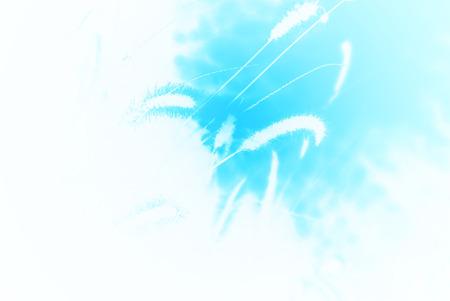 arte abstracto: Arte Abstracto - La hierba y la naturaleza de fondo - Maravilloso Azul