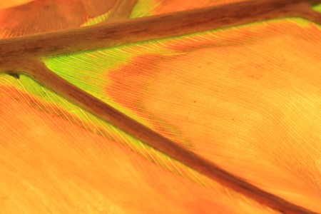 autumn splendor: Leaf of Seasons - Abstract Art from Nature