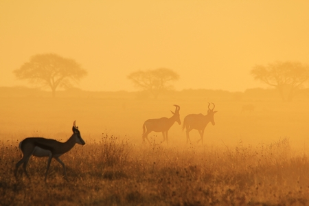 African Wildlife Background - From the Golden Dust