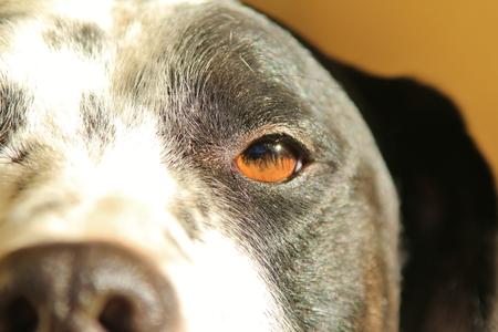 Man's Best Friend - Dog Eye Background