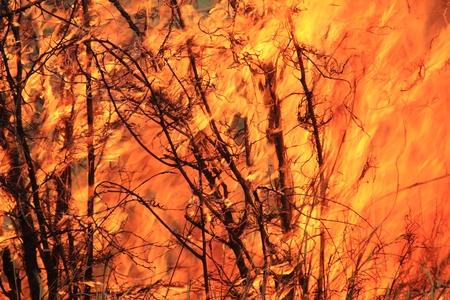 burning bush: Fire and Flame Background - Dangerous Heat Stock Photo