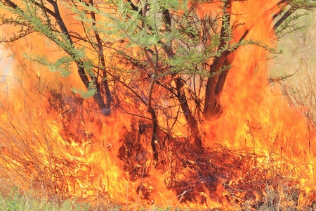 Fire and Flame Background - Dangerous Heat Banco de Imagens