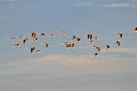 wanderers: Flamingo Background  African Wildlife  Sky Wanderers