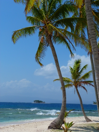 winter escape: Palmtree on tropical Iceland, San Blas, Panama Stock Photo
