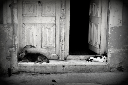 doorstep: Black and white photo of a cat and dog enjoying the shade in the streets of Havana, Cuba