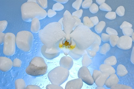 Orchid flower and white stones photo
