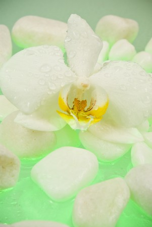 White orchid with white stones photo