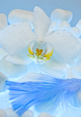 Orchid with white stones and feather photo