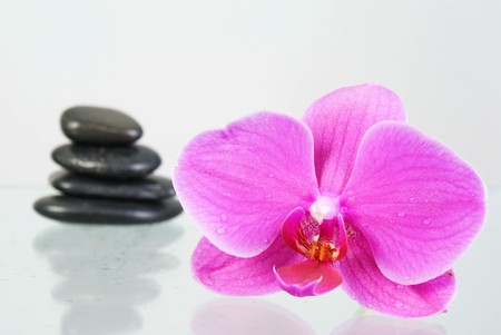 Still life with pink orchid  Stock Photo