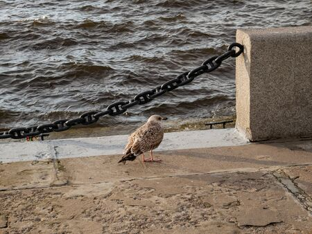 The seagull stands on a granite embankment and peers into the distance. The embankment and the sea, the ocean in front of it. The embodiment of reverie. loneliness, new beginnings.