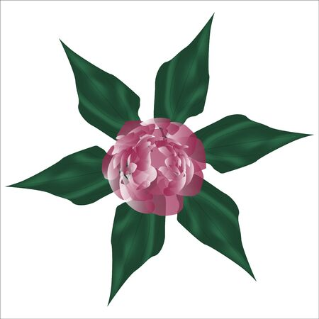 A drawing of a peony, a flower made in a realistic style. Green and pink tone. Vector eps illustration. Illusztráció