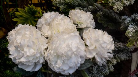 Beautiful artificial white peonies. Against the background of the Christmas tree. Flowers on the background of Christmas needles.