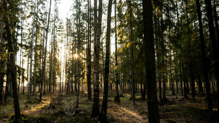A bright ray of light wading through the deciduous and spruce green forest. Calm summer warm mood. Stock fotó