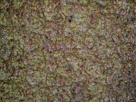 Colorful saturated bark of wood. The woody texture. Perfect as a background. Green little leaves on the bark of coniferous wood. Moss on the crust.